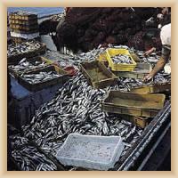 Insel Vis - Fischmarkt